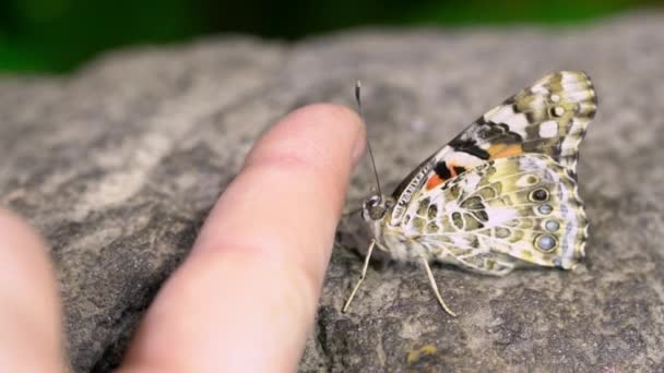 Butterfly next to person finger as they try to get it to climb on and it does not.