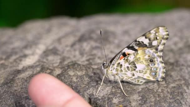 Člověk klade prst vedle motýl doufal, že bude stoupat na.