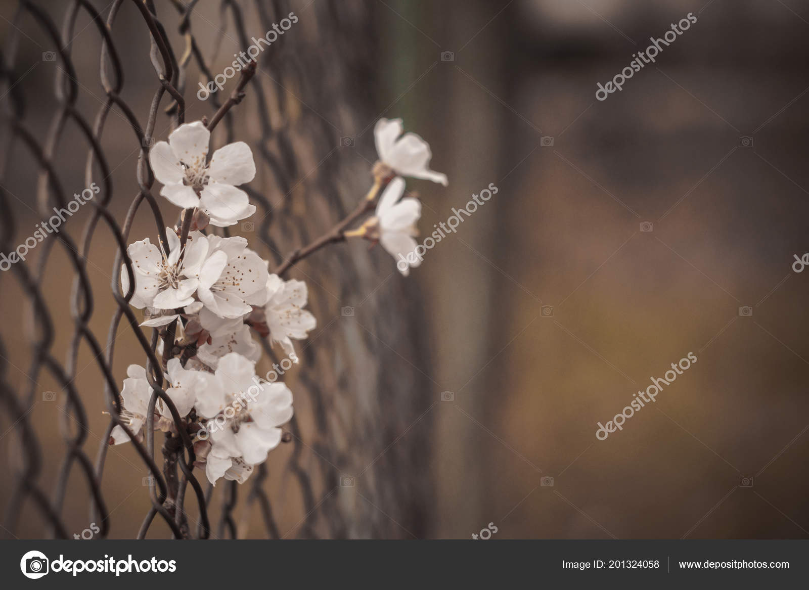 A sad picture of a flower in an iron fence.