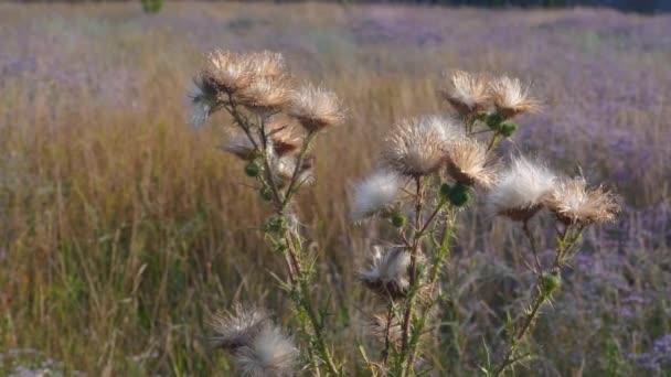 Divoká louka rostliny při západu slunce