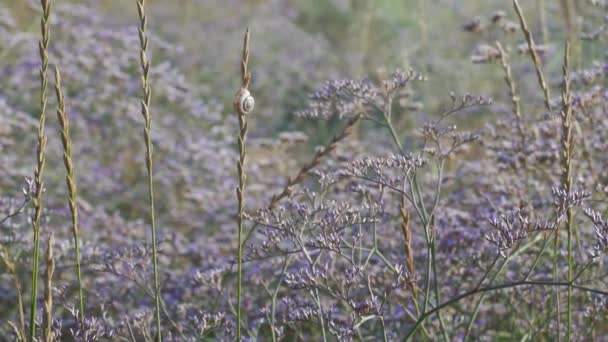 Meadow flowers swing from the wind