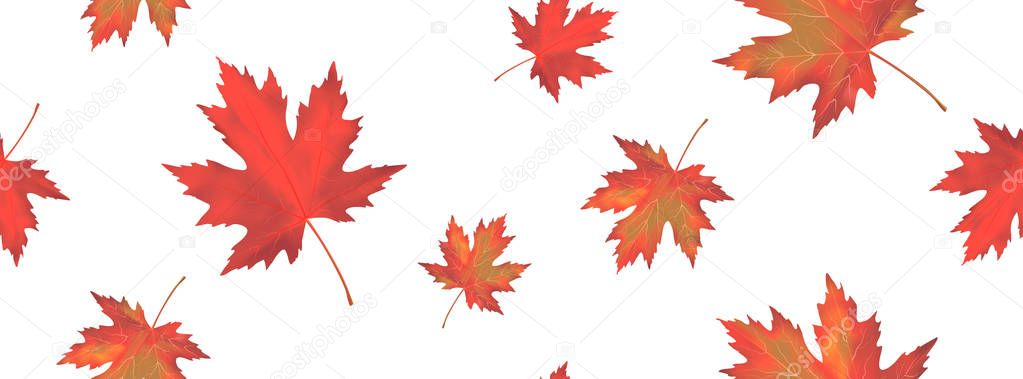 Seamless pattern with bright orange red falling maple leaves isolated on white background. Seasonal banner or holiday vintage decor. Realistic Vector illustration.