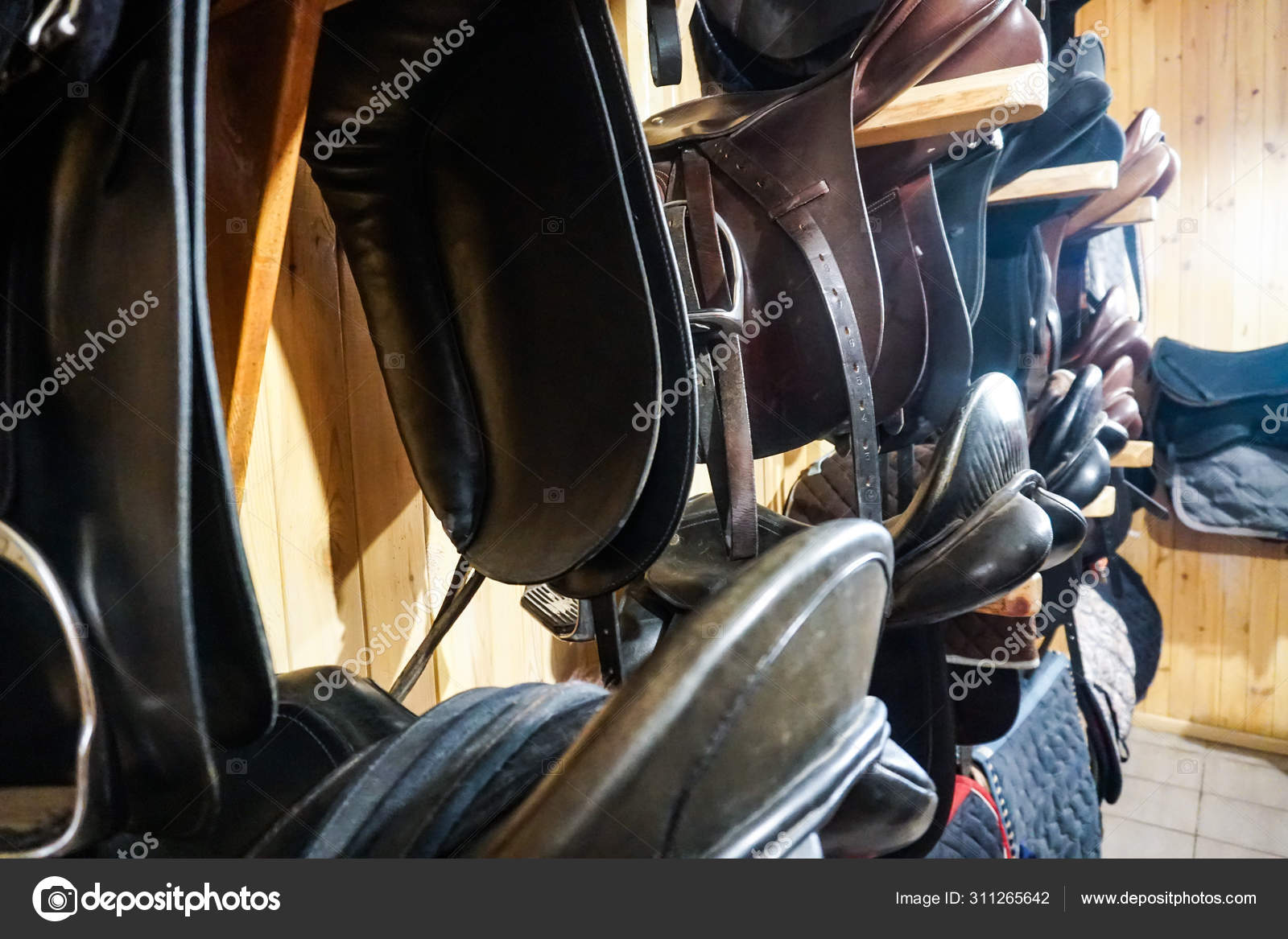 Tack Room With Western Saddles Bridles And Gear Stock Photo C Beaver1488 311265642
