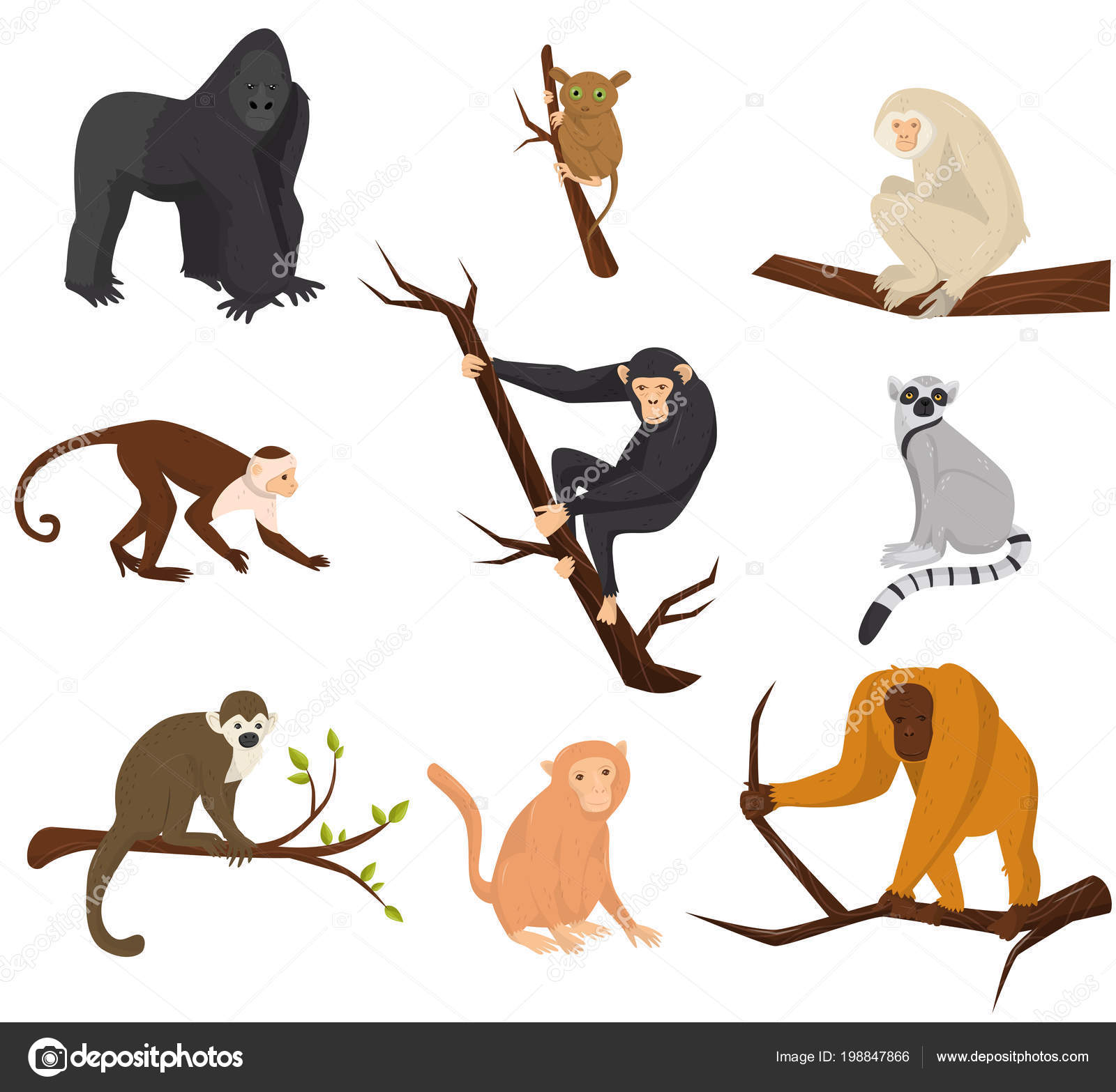 Flat vector set of 9 species of monkeys. Wild animals. Elements for promo  poster or banner of zoo park. Wildlife theme — Stock Vector © Happypictures  #198847866