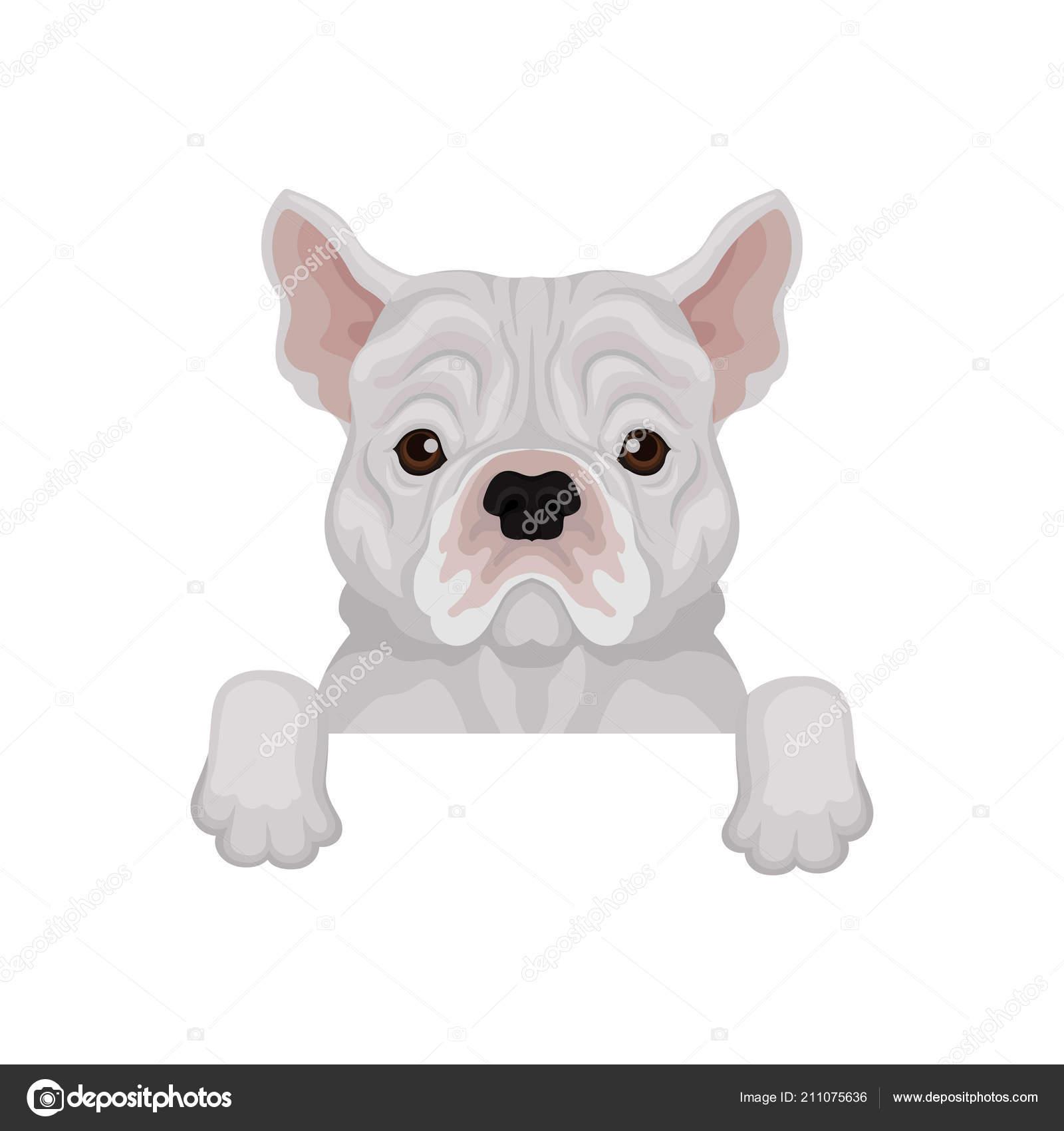 Adorabile bulldog francese spuntano da bordo. animali domestici