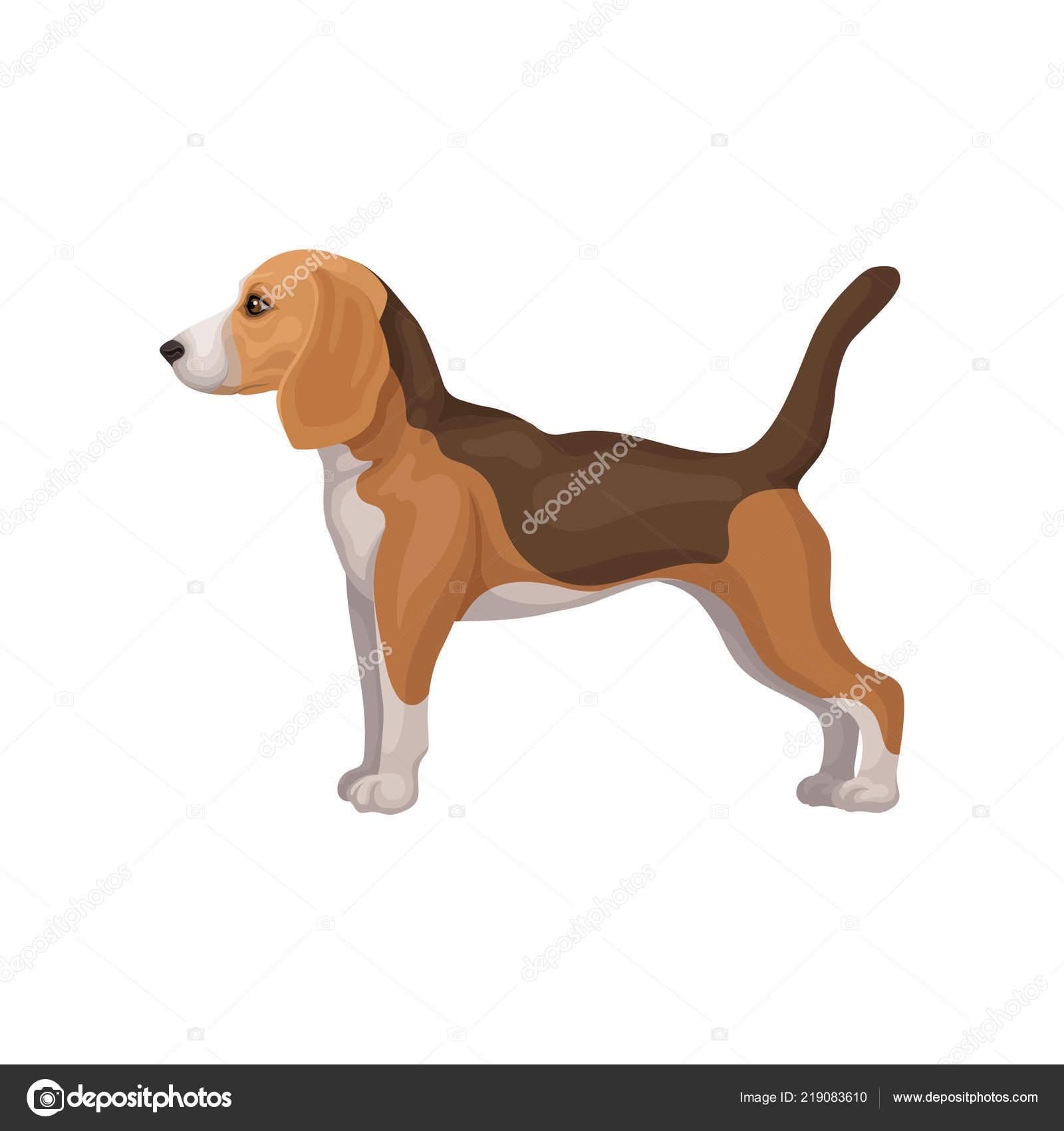 Condizione Del Cucciolo Di Cane Da Lepre Sveglio Nel Rack Vista