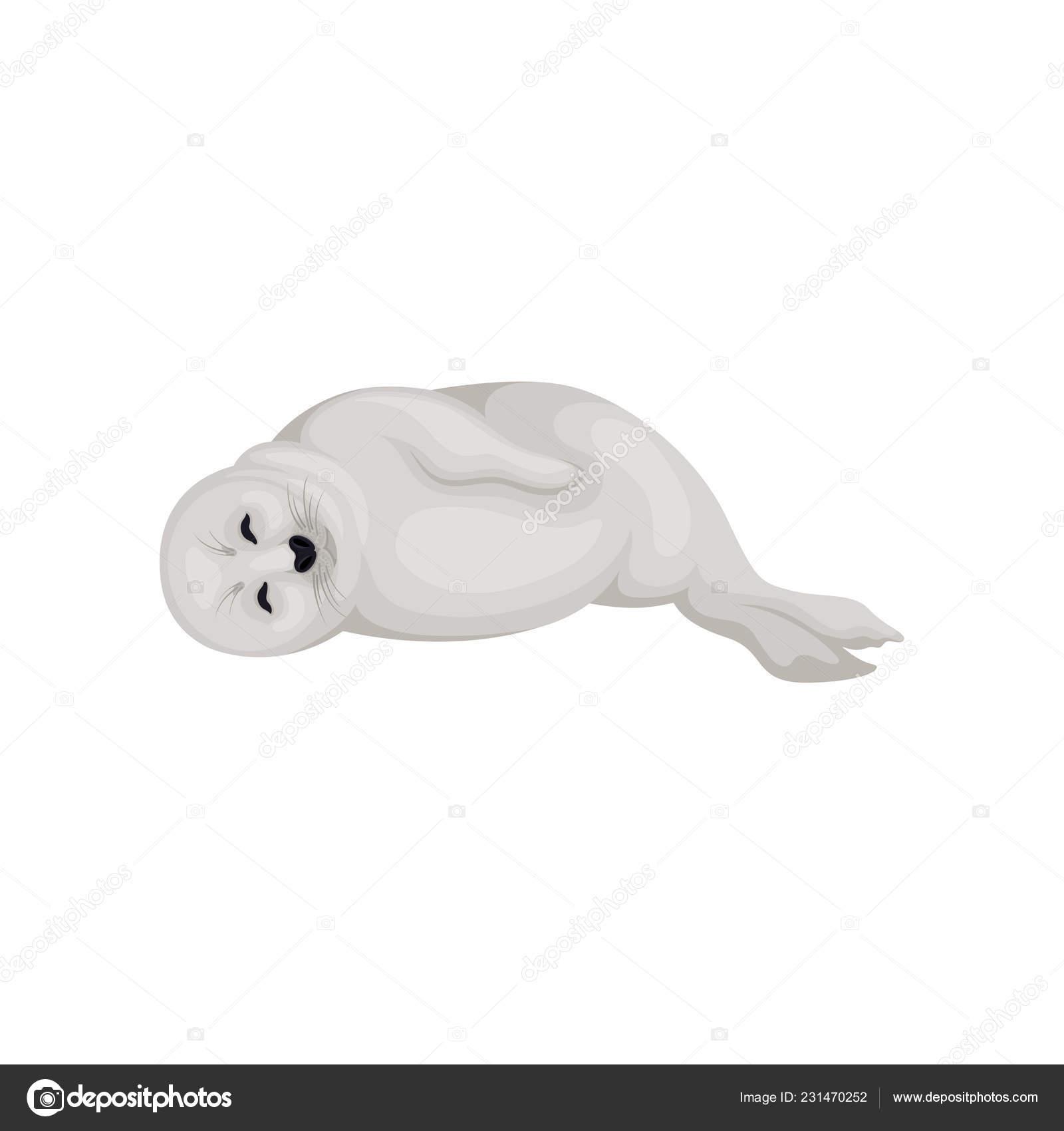 Vettore di foche animali cucciolo di foca sdraiato su un lato