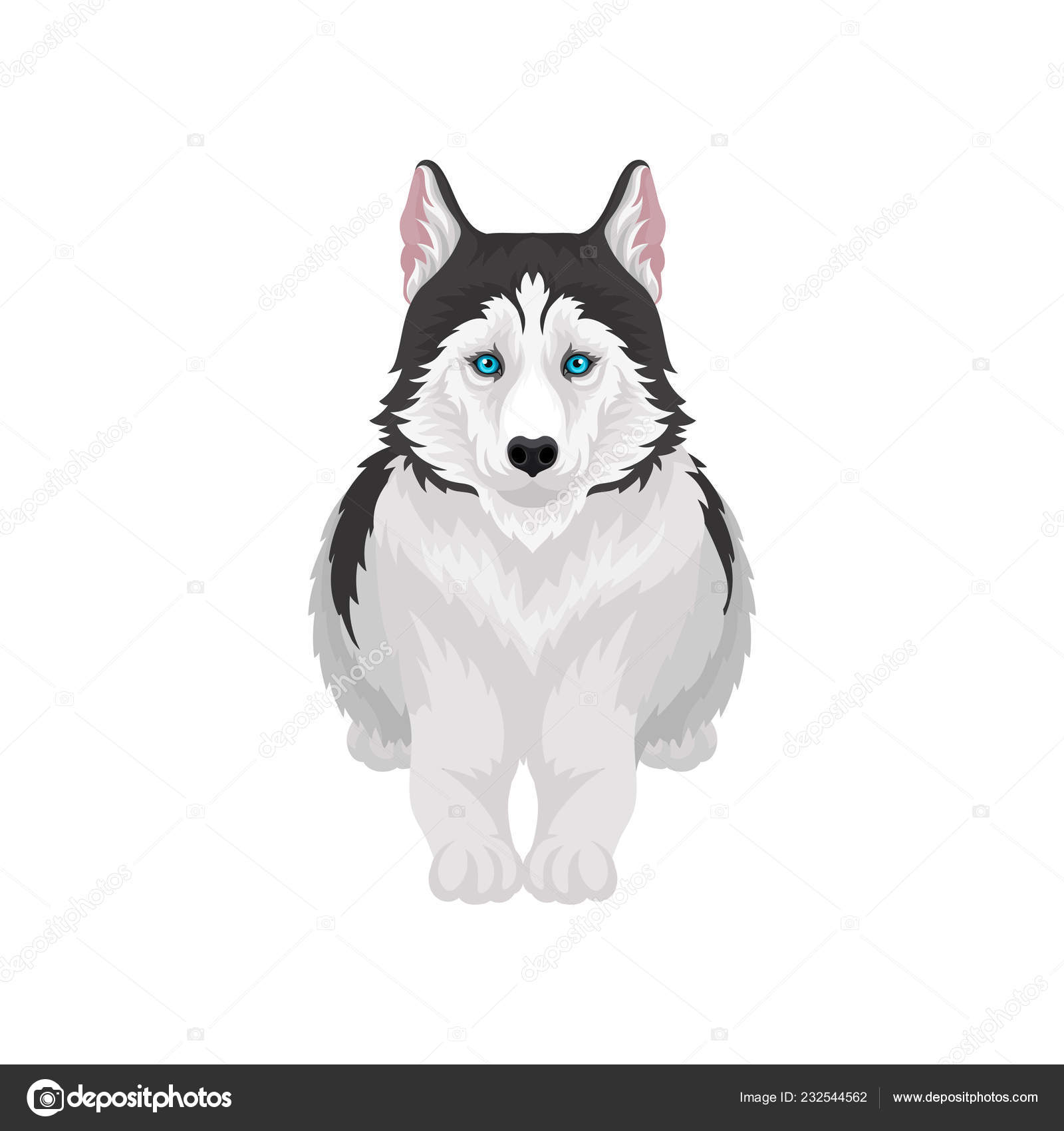 Siberian Husky Lying White And Black Purebred Dog Animal With Blue Eyes Front View Vector Illustration On A White Background Stock Vector C Happypictures 232544562