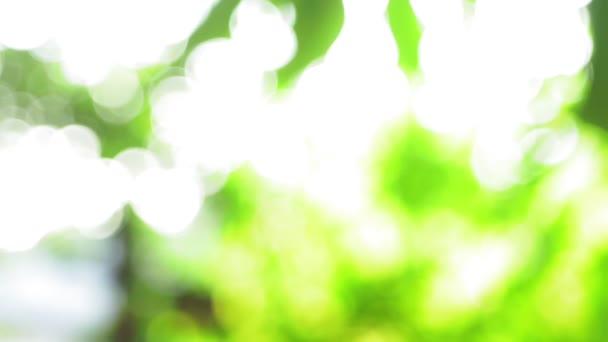 letní zelená přírodní rozostření bokeh