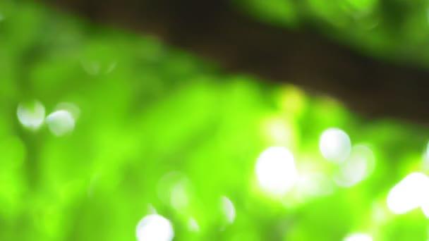 nyári zöld természetes háttér blur bokeh