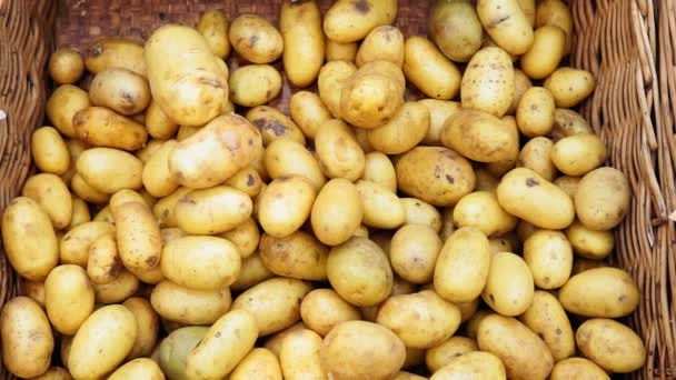 Fresh organic young potatoes sold in the market. Traditional bazaar.Trade in farm products. Selective focus.