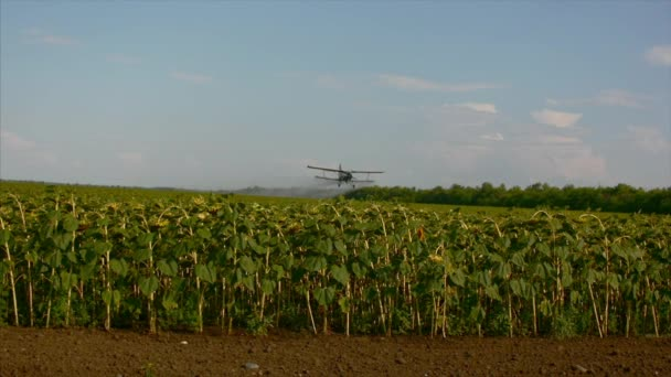 Field with sunflowers, a white hang-glider flying hang glider spray fertilizer over the field with sunflowers.