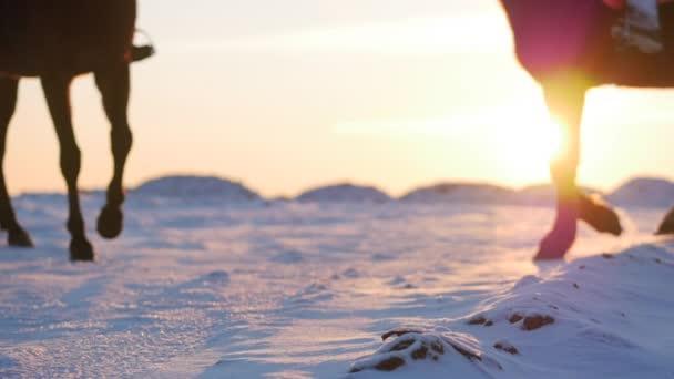 Lovak, lovasok és a tél, a naplemente, zár-megjelöl. Gyönyörű ló, a lovas, a téli, lassú mozgás. Lövés a Stedikam, szerelem fogalmát a vadon élő állatok.