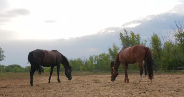 Beautiful thoroughbred horses is in the stable behind a metal bars looking into the camera. Animal care. The concept of horses and people.
