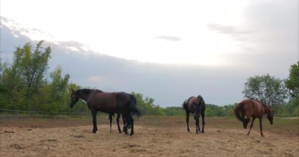 Krásní plnokrevní koně jsou ve stáji za kovovou tyčí, která hledí do kamery. Péče o zvířata. Pojetí koní a lidí.