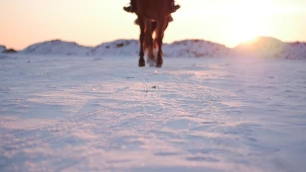 Pferde mit Reitern und der Winter bei Sonnenuntergang aus nächster Nähe. schönes Pferd mit einem Reiter im Winter, Zeitlupe. Schießen auf stedikam, Konzept Liebe die Tierwelt.