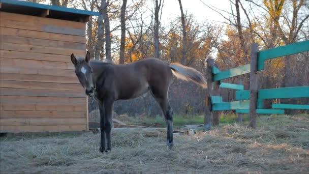 Malý hřebec, kráčí vedle své matky s koněm.Péče o zvířata. Koncept Léto koní a lidí.