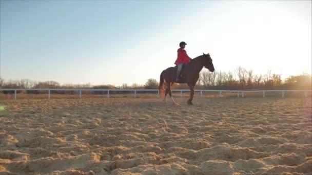 Lovas túrák lova naplementekor. Nő lovas tanul-hoz lovagol egy ló-ban este-ra egy kék ég háttér. Állatgondozás. A lovak és az emberek fogalma.