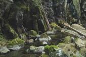 Montagne di autunno Carpazi ucraini. Rocce di pietra e fiume della montagna