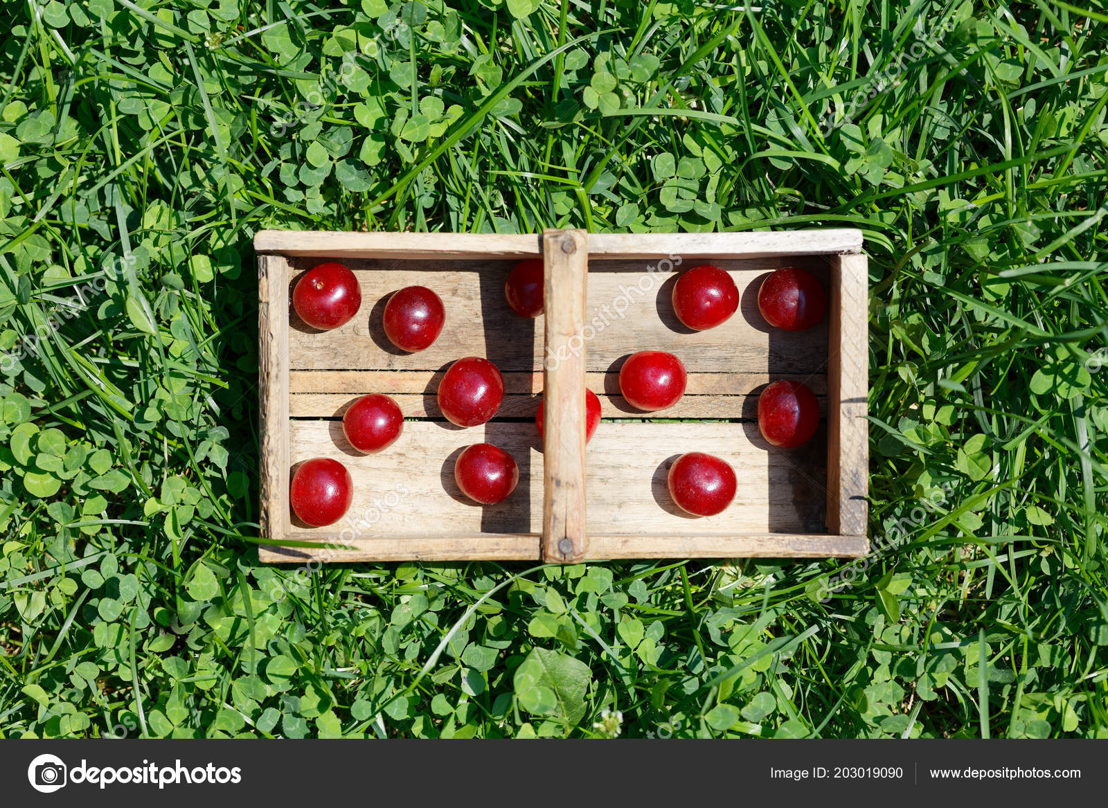Christbaumkugeln Polen.Saure Cherrys Obst Garten Ernten Ansicht Von Oben Foto Polen