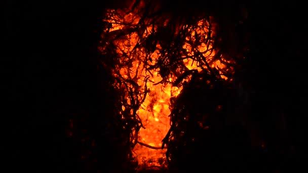 textura ohně. oheň s velkým plamenem. Bonfire detail