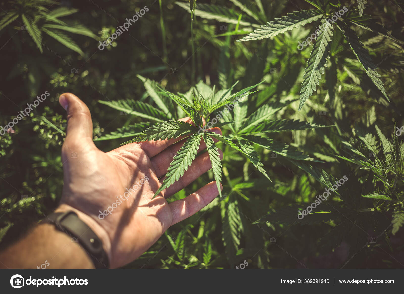 Пушкин и марихуана семена под гидропонику