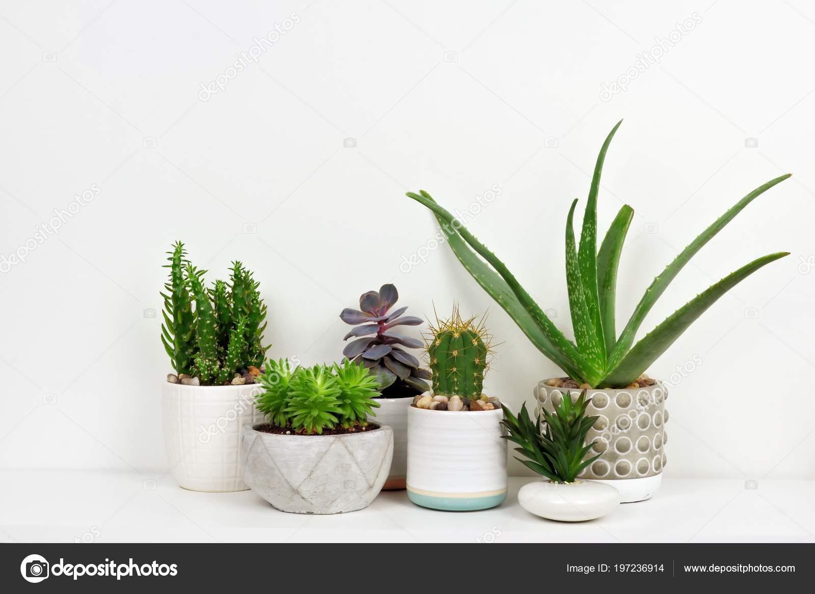 Gruppo vari indoor cactus piante grasse vaso vista laterale