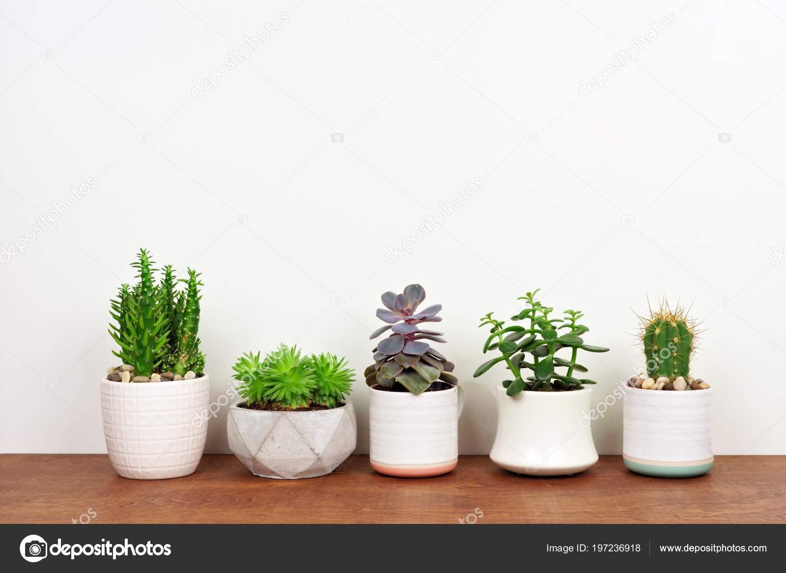Gruppo vari vaso cactus piante grasse una riga vista laterale