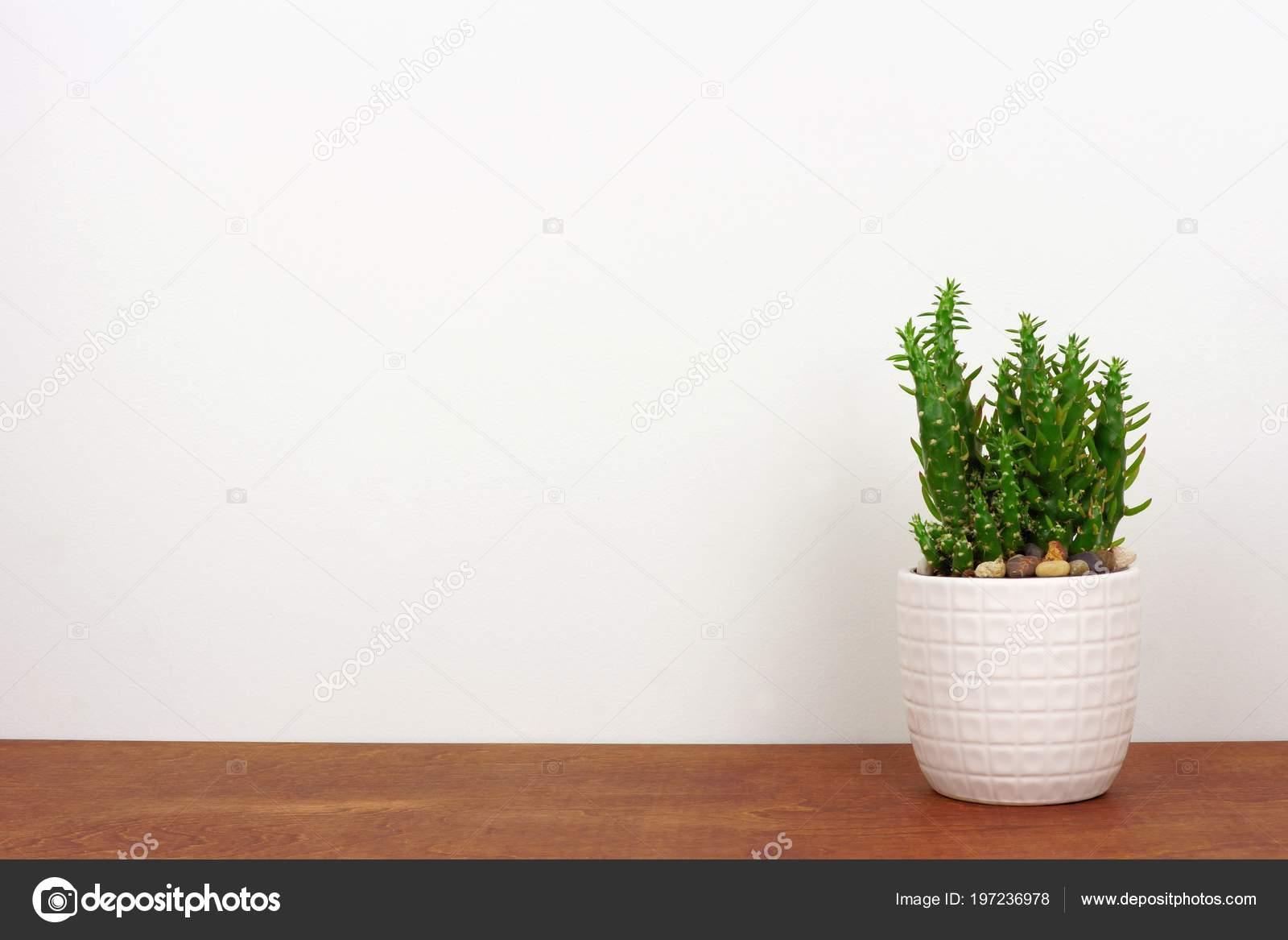 Pianta coperta del cactus vaso bianco vista laterale sulla mensola