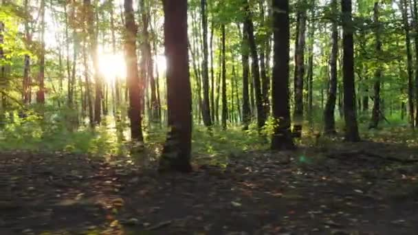 Sonnenuntergang strahlt durch Bäume im Wald. d-cineartige Datei zur Farbkorrektur.