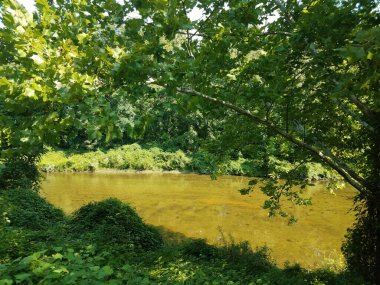 medium sized river and green trees along the shores