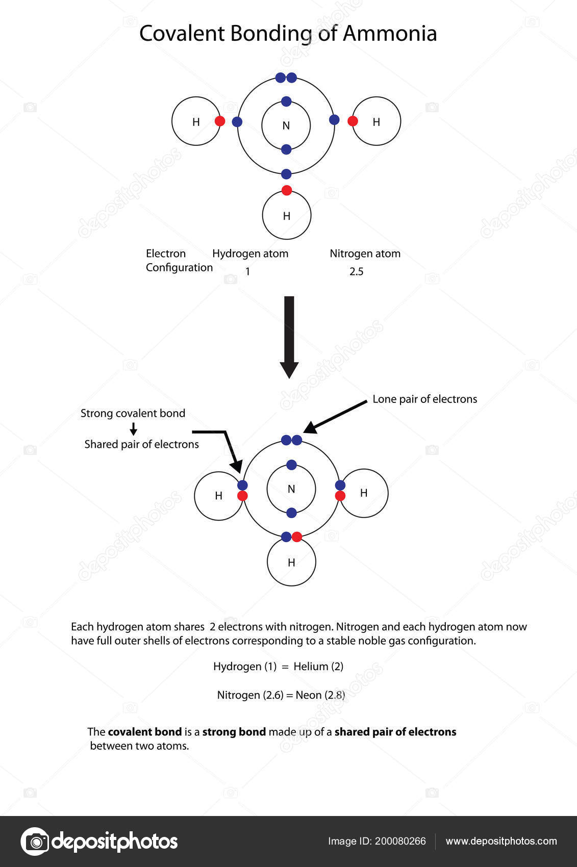 diagram illustrate covalent bonding amonia fully labelled diagram — stock  vector