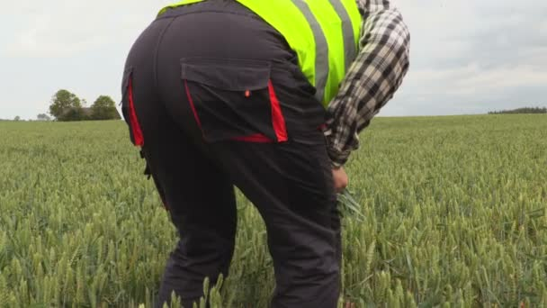 Farmář na pšeničné pole. Koncept zemědělství
