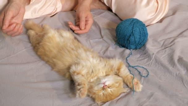 Žena blízko spícího koťátka