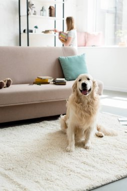 beautiful golden retriever sitting on floor while owner taking books from shelf blurred on background