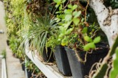 close-up view of beautiful green potted plants on shelf