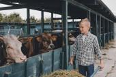 šťastný chlapec tlačí trakař s trávou a při pohledu na krávy v kabince
