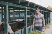 usmívající se farmář v kostkované košili krmení krav s trávou na ranči
