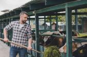 Fotografie středního věku farmář v kostkované košili krmení krav s trávou na ranči