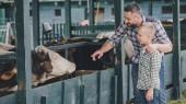 Fotografie Seitenansicht der glückliche Vater und Sohn in karierten Hemden, die Kühe im Stall zu betrachten