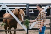 boční pohled na farmář drží trávy a krmení koně ve stáji