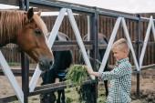 mosolygó fiú gazdaság fű és etetés a ló istállóban