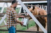 Fényképek középső éves mezőgazdasági termelő gazdaság vödör, és etetés a ló a stabil