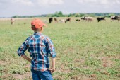 back view of boy in cap standing and looking at cows grazing in field