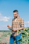 Fotografie pohledný farmář drží zralé rajče a pomocí digitálních tablet stojí v poli