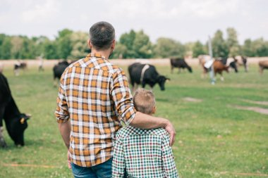 Back view of father and son standing together and looking at cows grazing on farm stock vector