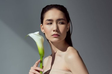 attractive naked asian girl with calla flower, isolated on grey