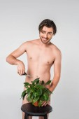 Fotografie smiling naked man with scissors standing behind green plant in flowerpot on chair isolated on grey