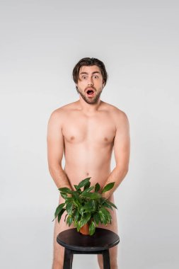shocked naked man standing behind green plant in flowerpot on chair isolated on grey