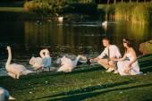 beautiful young wedding couple feeding swans near lake